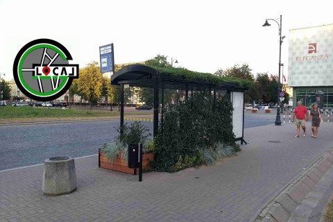 Zielony przystanek w Białymstoku z trawą na dachu